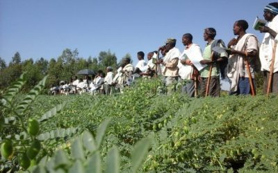 iCRA presents: CDAIS Story of Change – Chickpeas in Ethiopia