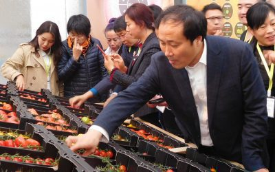 What's there to learn for Chinese farmer leaders from the Dutch Agri-food sector?